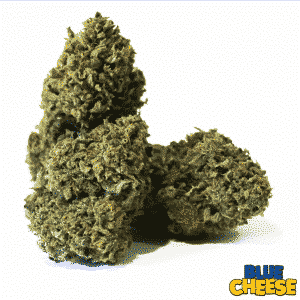 blue cheese cannabis light legale