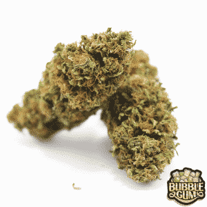bubble gum cannabis legale light