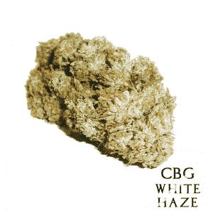 cbg white haze cannabis light