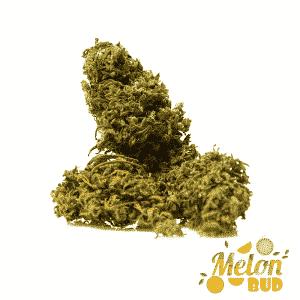 melon bud cannabis light