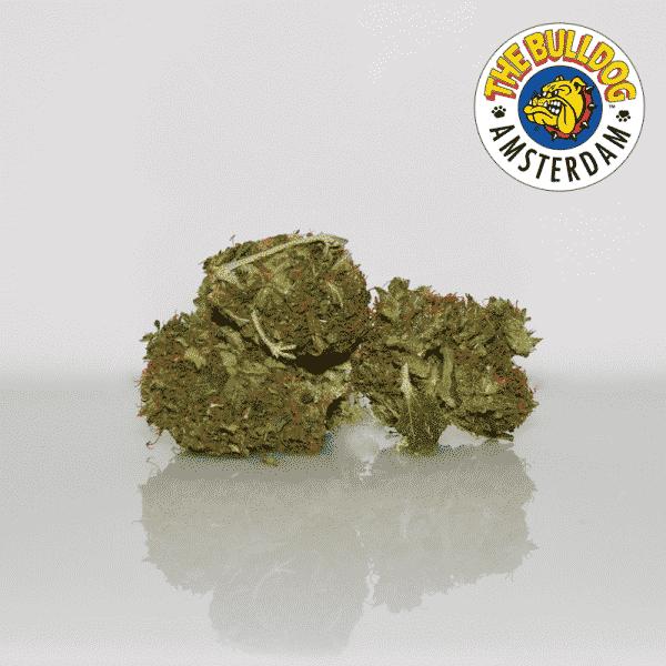 royal cheese cannabis light the bulldog