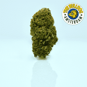 super skunk cannabis light the bulldog