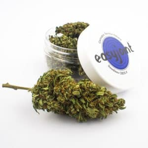 easy joint seedless cbd5 8