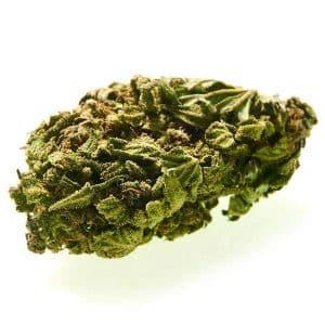 ganesh cannabe cannabis lught