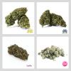 kit smart cannabis light