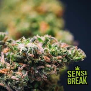 sensi break canaparoma