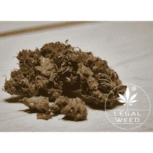 goa shanti legal weed