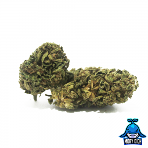 moby dick cannabis light