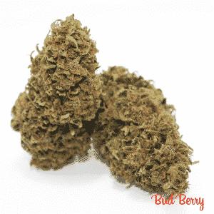 bud berry 2