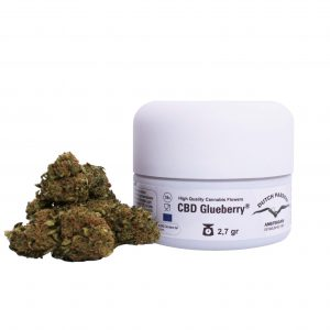 cbd glueberry dutch passion cannabis light