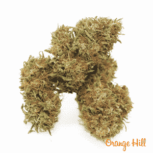 orange hill 3