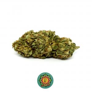 maria salvador cannabislight