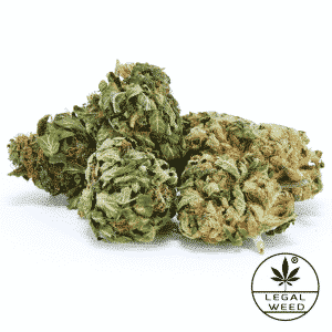 maria salvador legal weed