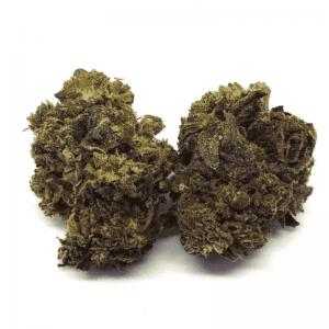 samsara cannabis light 1