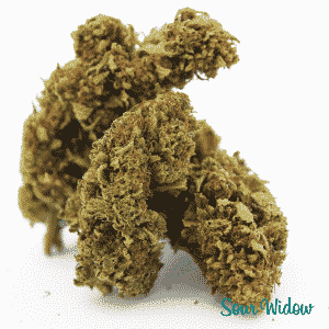 sour widow 3