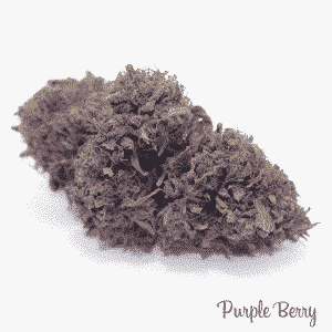 purple berry 2