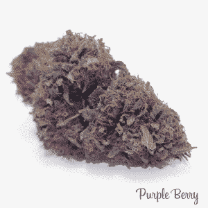 purple berry 3