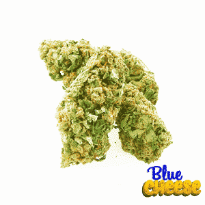 blue cheese cannabis light