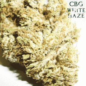 cbg white haze canapa light