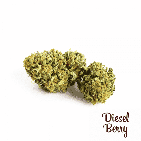 diesel berry cannabis light