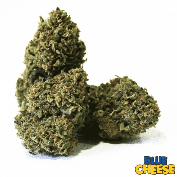 blue cheese cannabis light legale