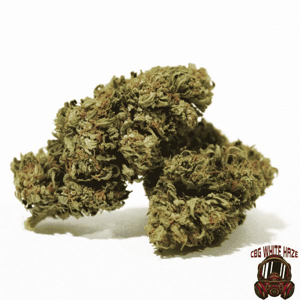 cbg white haze cannabis light legale