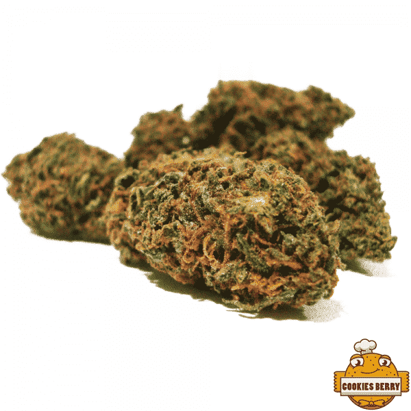 cookies berry cannabis light legale