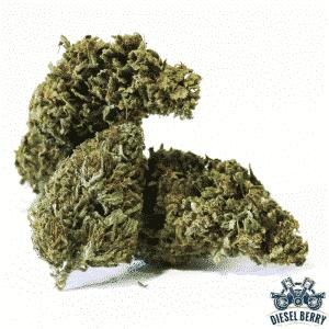 diesel berry cannabis light legale
