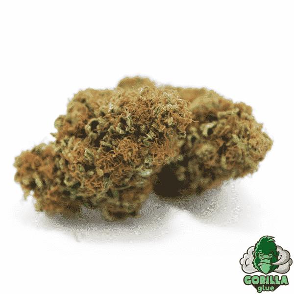 gorilla glue cannabis light legale